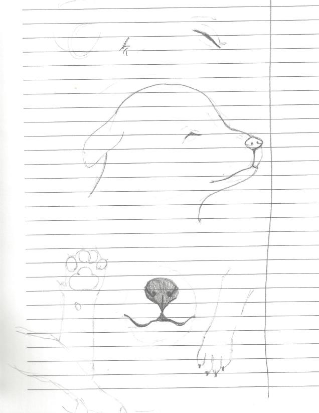 drawings3