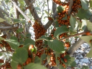 Even more ladybugs
