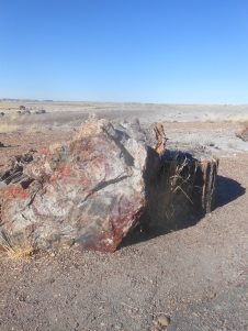 Petrified wood at the Petrified Forest, AZ.