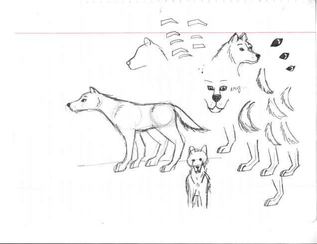 6-13-17 wolves1.jpg